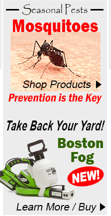 control mosquitoes, boston foge
