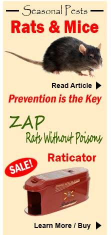 control rats, mice
