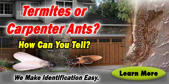termite carpenter ant banner