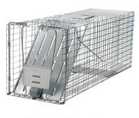 Raccoon Traps Home Depot