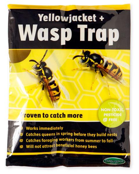 Pic yellow jacket wasp trap