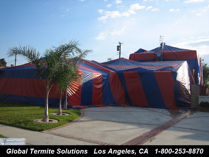 structural fumigation & Drywood Termites - How To Kill and Get Rid of Drywood Termites