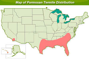Formosan Termites How To Kill And Get Rid Of Formosan Termites - Us termite map