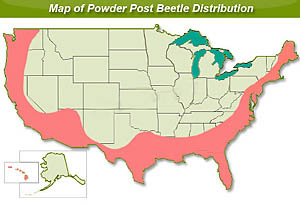 us map of powder post beetles