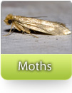How To Kill Moths