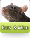 How To Kill Rats and  Mice