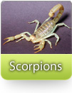 How To Kill Scorpions